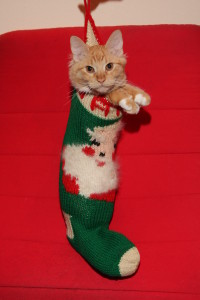 christmas-cat-122108-004-200x300